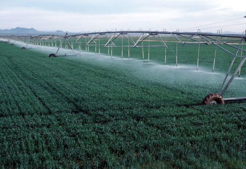 Израильские специалисты поделятся опытом с азербайджанскими фермерами
