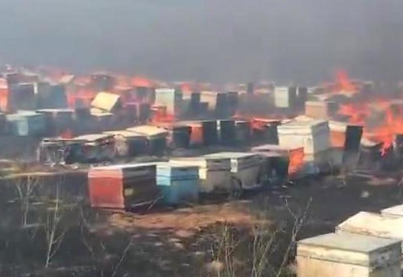 Армяне сожгли сотни ульев с пчелами, покидая Кельбаджар