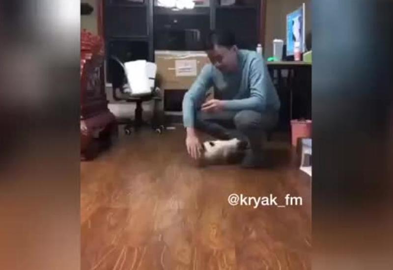 Хозяин дал котенку мастер-класс по забегам по дому