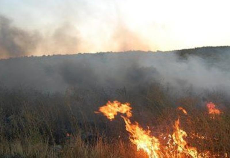 Сильный пожар в Гирканском национальном парке