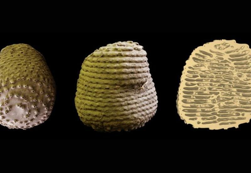 Математики нашли закон построения термитников