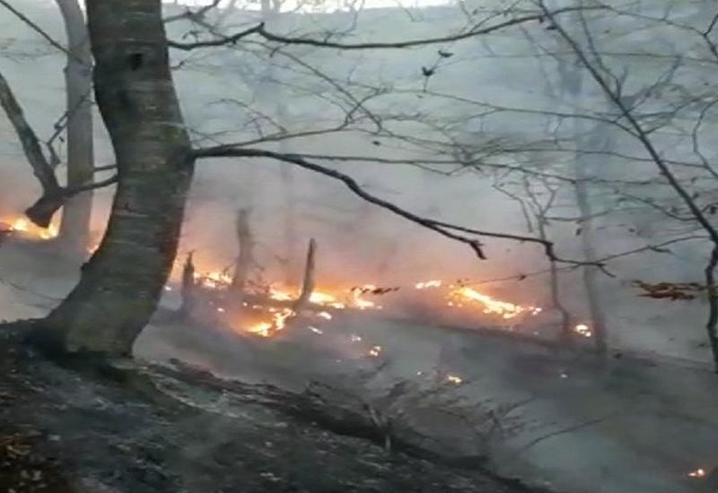 В Гирканском национальном парке подсчитывают ущерб от пожара