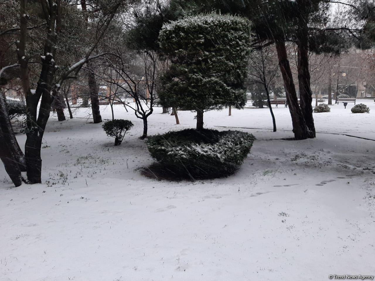 Первый снег в Баку