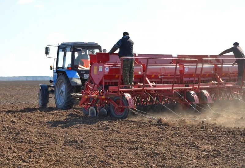 Разминированные территории Агдама засеяли пшеницей