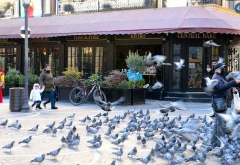 Постоянные «жители» бакинской улицы не остаются без внимания людей