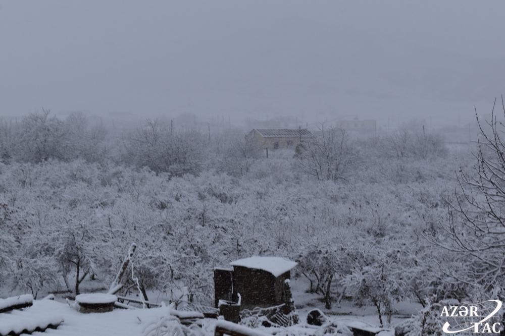 Агдамское село Шелли, знаменитое сочными и вкусными гранатами