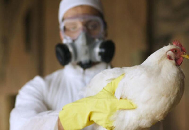 В Азербайджане повышается риск распространения птичьего гриппа