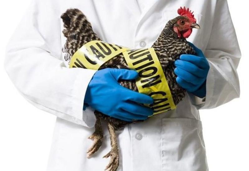 В Южной Корее за сутки выявили четыре новых очага птичьего гриппа