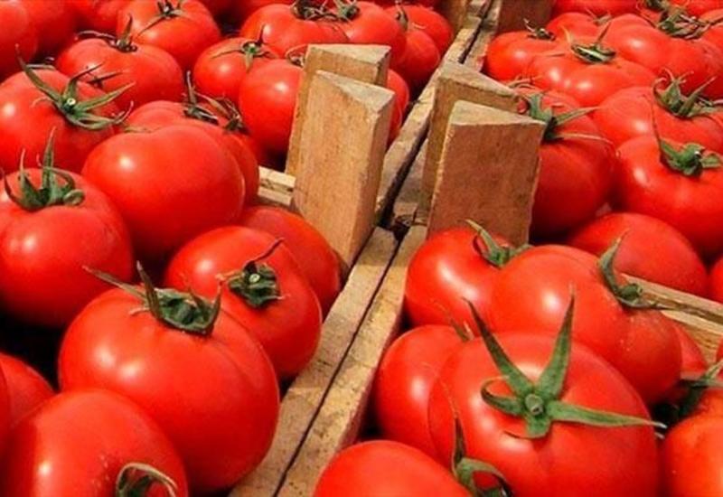 Россия возвратила в Азербайджан 50 тонн помидоров