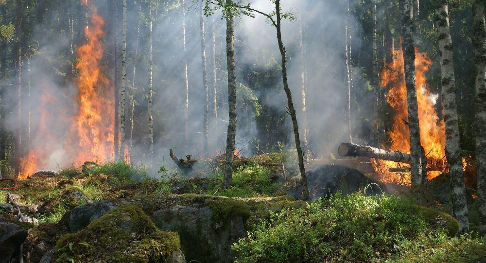 Более 800 га растительности сгорело в результате пожара на юге Франции
