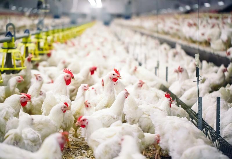 Азербайджан ограничил импорт птичьей продукции из ряда регионов двух стран