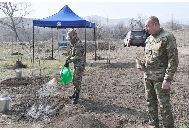 Президент Ильхам Алиев и Первая леди Мехрибан Алиева посадили чинары в Зангилане