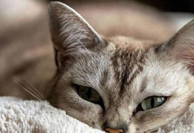 Кошка покажет вам, есть ли в доме благополучие, мир и покой
