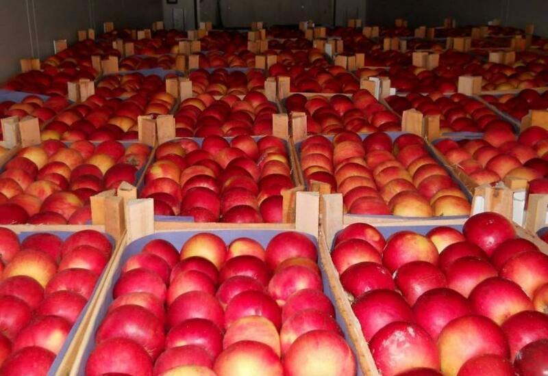 Из Азербайджана в Россию будет экспортированно свыше 88 тыс. тонн яблок