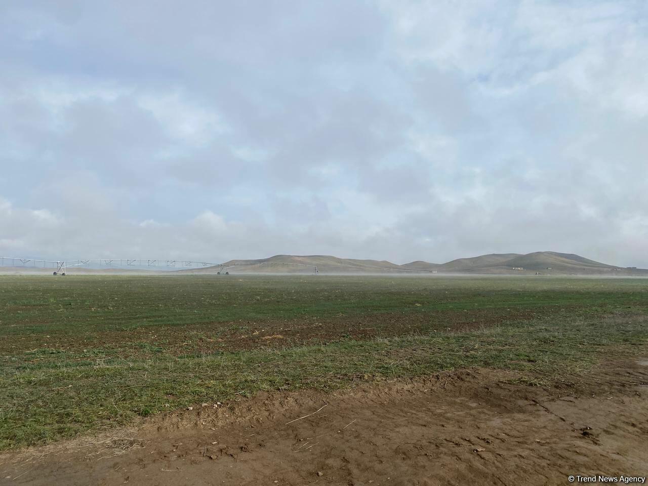 В разминированном  Джабраиле начался сев зерновых