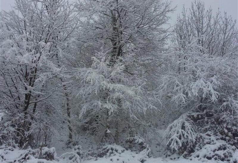 Зимние пейзажи национальных парков Азербайджана
