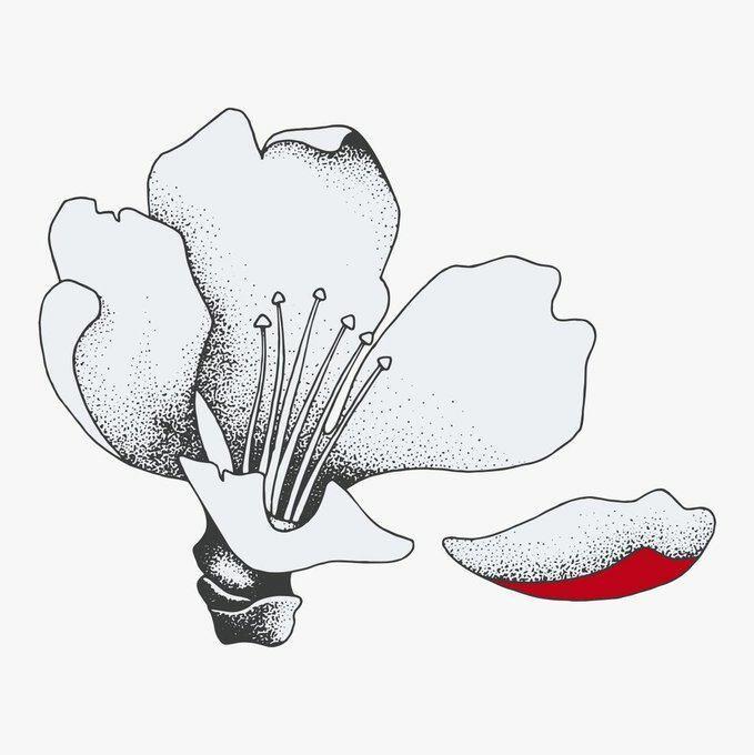 Мы требуем справедливости для невинных жертв Ходжалинского геноцида