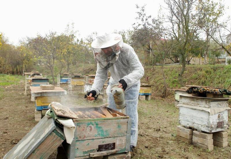 В Карабахе будет стремительно развиваться пчеловодство