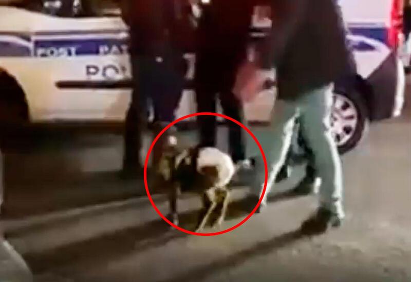 МВД о задержании лиц, выгуливавших ягненка в подгузнике в Баку
