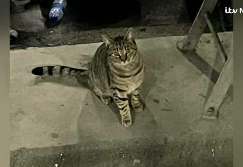 Скоростной поезд из Лондона задержали на 2,5 часа из-за упрямой кошки
