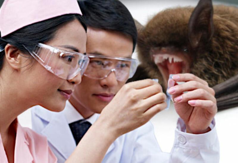 В Китае нашли ближайшего родственника SARS-CoV-2