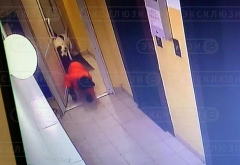 Бойцовская собака вцепилась в 9-летнего мальчика
