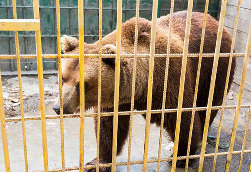 Стрелок из Мытищ держал в вольерах тигра, рысь и медведя