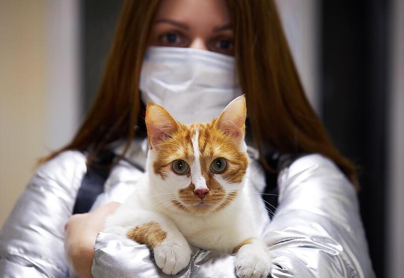 Россия зарегистрировала первую в мире вакцину против COVID-19 для животных