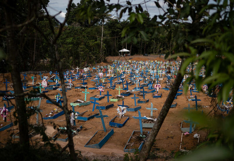 В Бразилии к борьбе с COVID-19 планируют привлечь ветеринаров