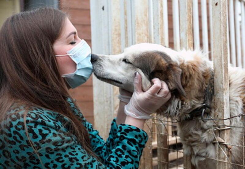 В ВОЗ посоветовали больным COVID-19 избегать контактов с животными