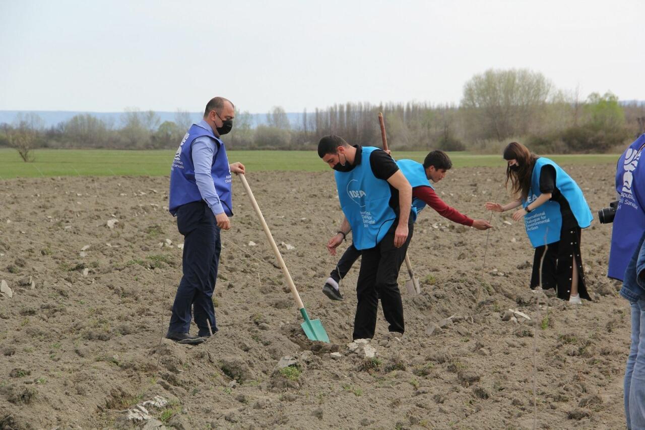 """В рамках """"Зеленого марафона"""" продолжаются акции по посадке деревьев"""