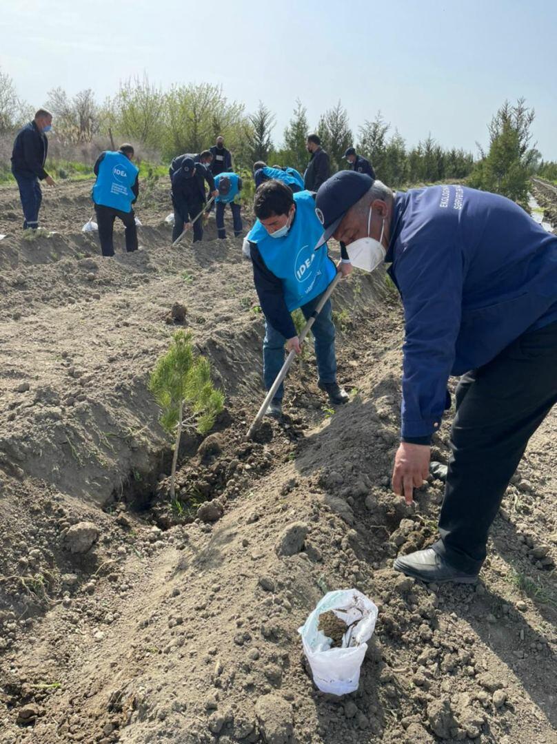 В Азербайджане продолжаются акции по посадке деревьев в рамках «Зеленого марафона»