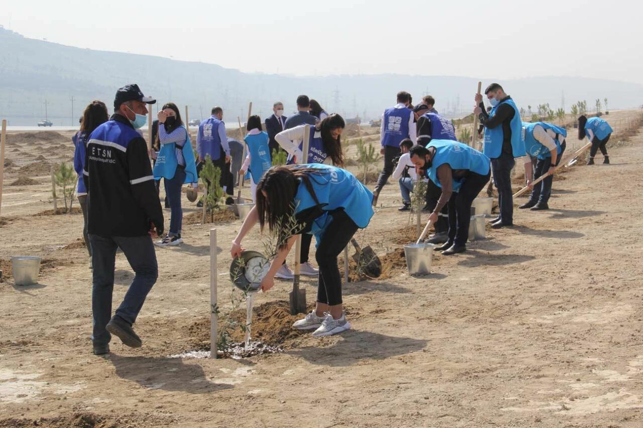 В Азербайджане успешно продолжается «Зеленый марафон»