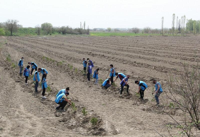 В Азербайджане в рамках проекта «Зеленый марафон» посажены медоносные деревья