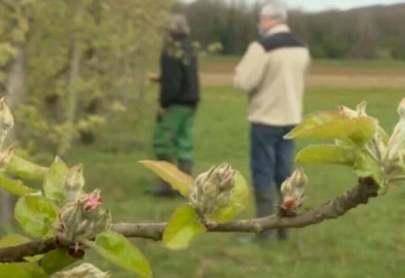 Морозы погубили урожай садов и виноградников Франции