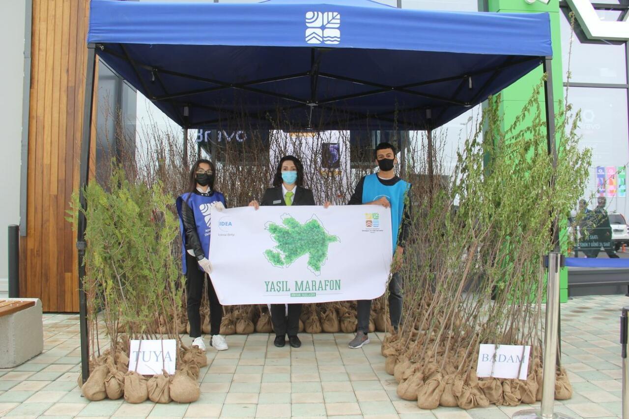 """В рамках """"Зеленого марафона"""" жителям Шамкира розданы саженцы деревьев"""