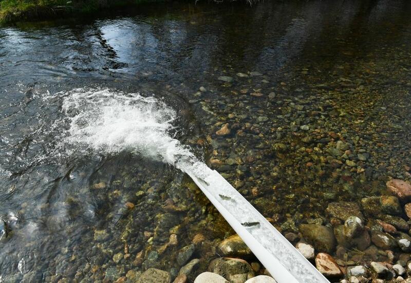 В реки Губадлинского района выпущены мальки форели