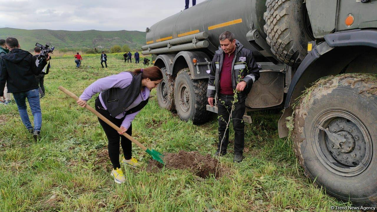 В Джебраиле и Губадлы посажено более 700 деревьев