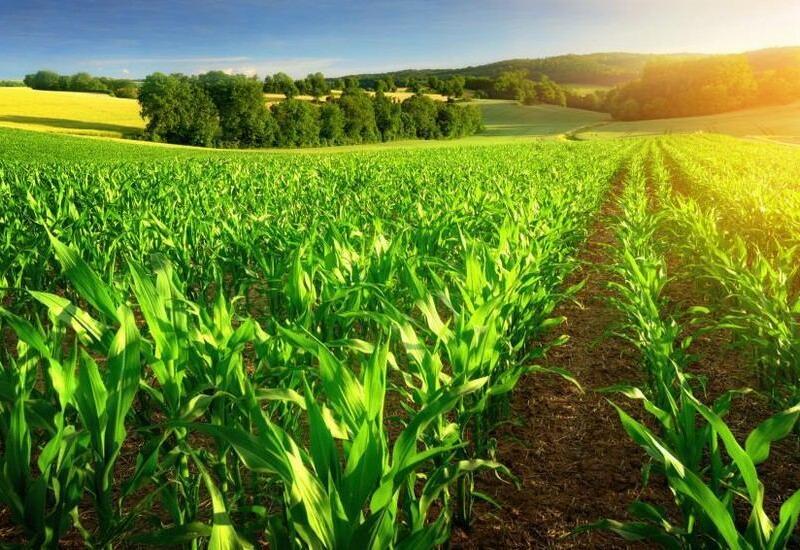 Владельцы малых агрохозяйств должны соответствовать новым условиям экспорта