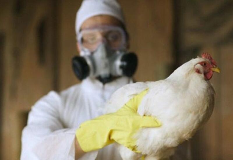 Азербайджан ввел ограничения на импорт продукции птицеводства из трех стран Европы