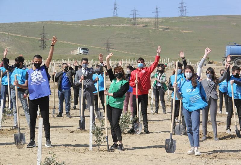 В Баку в рамках проекта «Зеленый марафон» прошла акция по посадке деревьев
