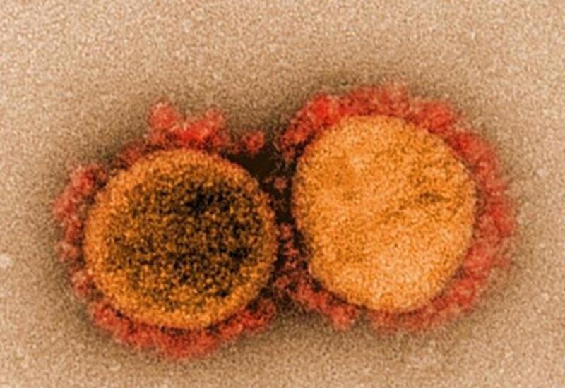 Раскрыта опасность бразильского штамма коронавируса