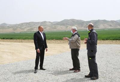 Президент Ильхам Алиев принял участие в презентации агропарка ООО Aqro Dairy в Гаджигабуле - ФОТО - ВИДЕО
