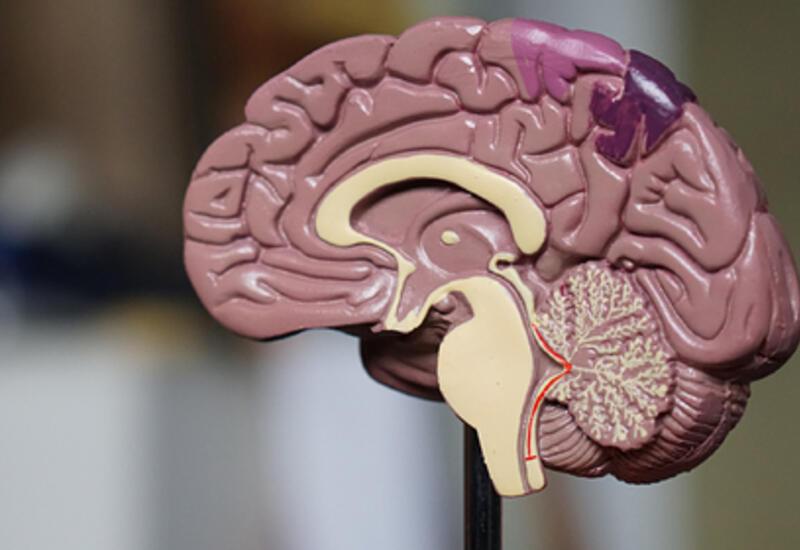 Раскрыт механизм поражения мозга коронавирусом