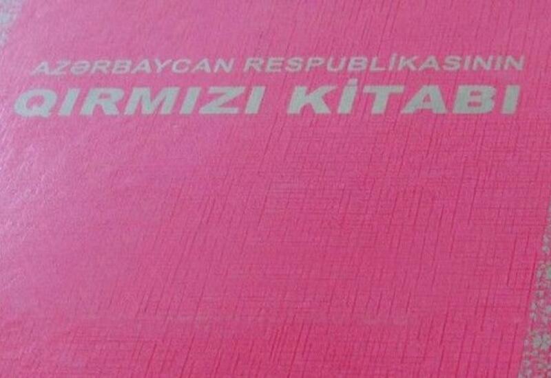 В Азербайджане обновляют «Красную книгу»