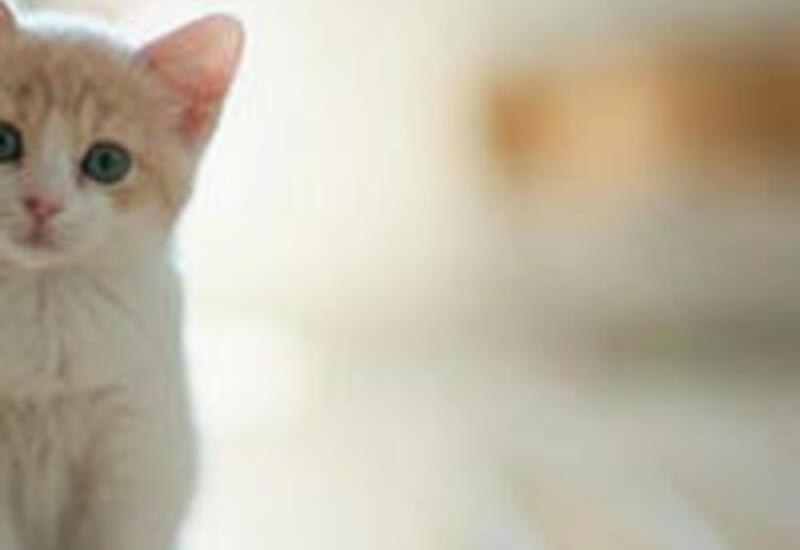 7 интересных фактов о животных, которые вы услышите впервые