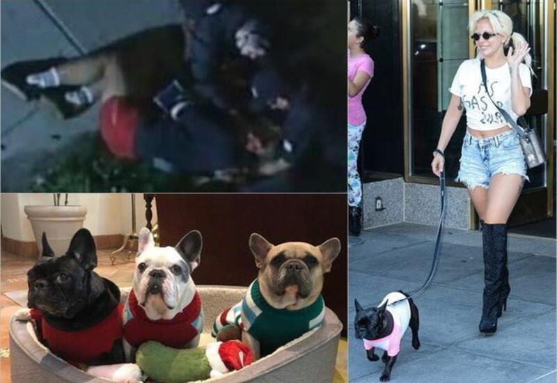 По делу о похищении собак Леди Гаги арестовали пять человек