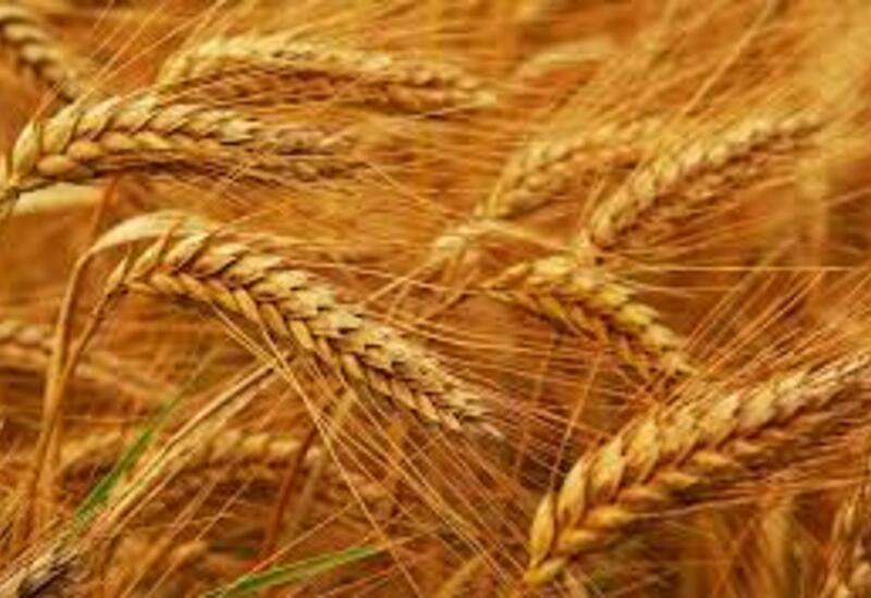 Отменяется таможенная пошлина на экспортируемую из Азербайджана пшеницу