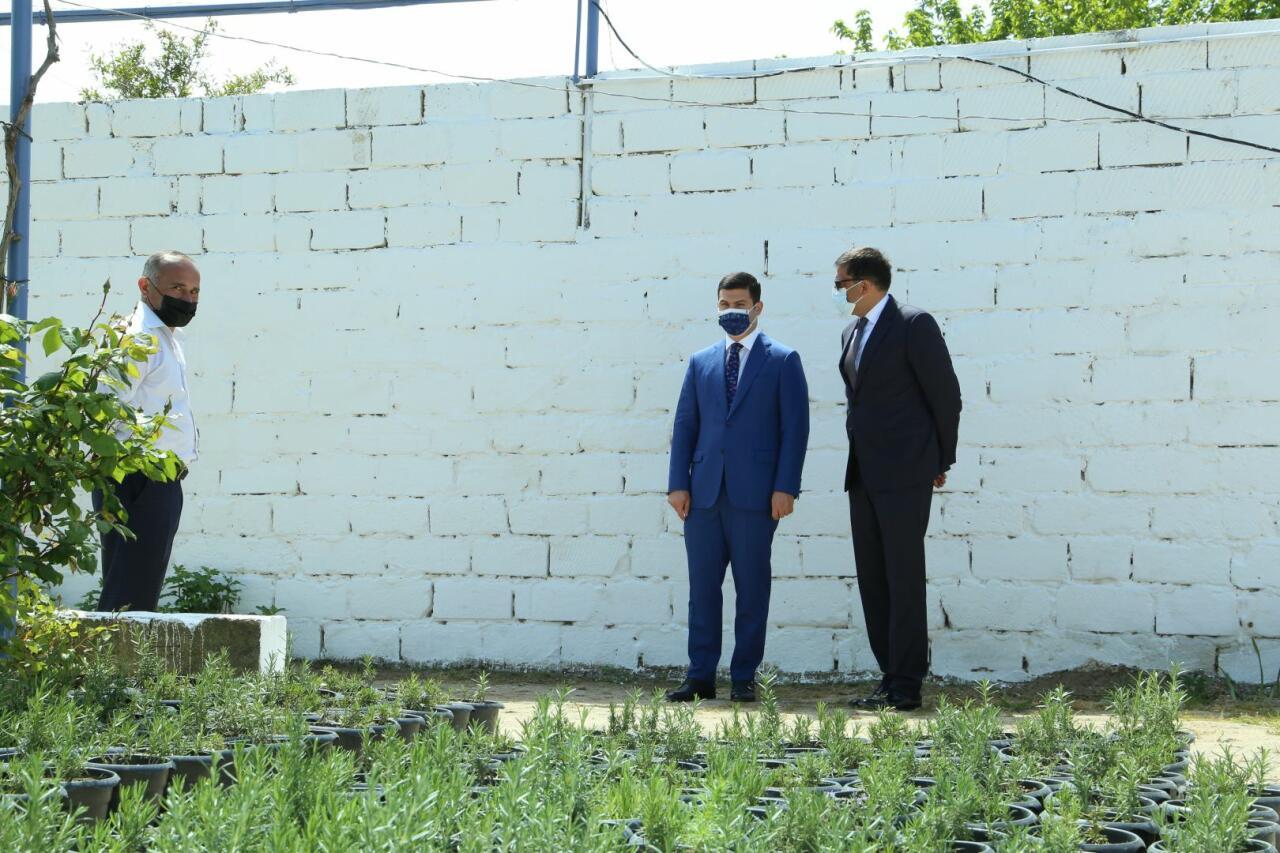 Проект «Процветающий Абшерон» в Пиршаги