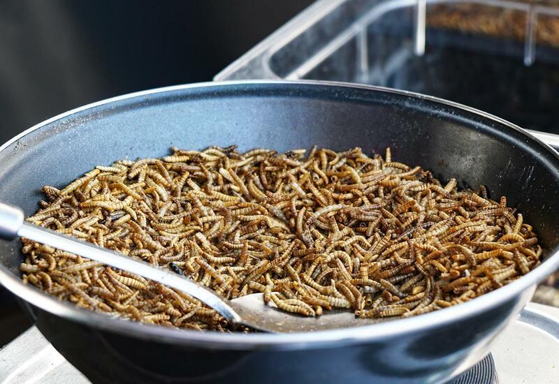 В Европе разрешили есть червей